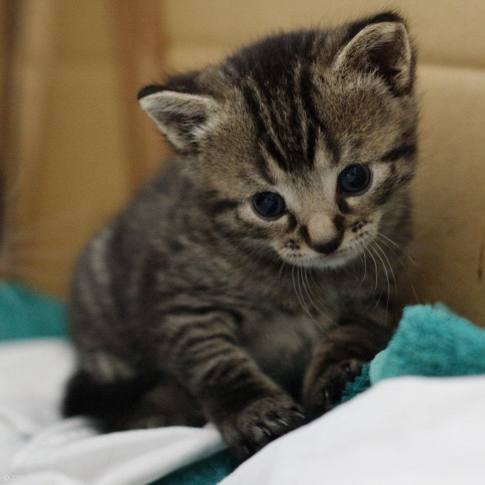 Kitten Ben