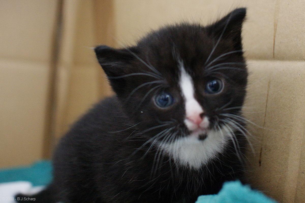 Kitten Sam